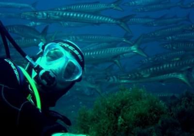 Agenzia/operatore Turistico Diving Center Progetto Atlantide